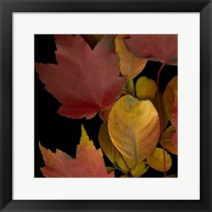 Framed Vivid Leaves IV Print