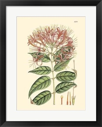 Framed Floral Passion II Print