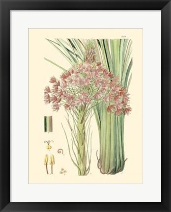 Framed Floral Passion III Print