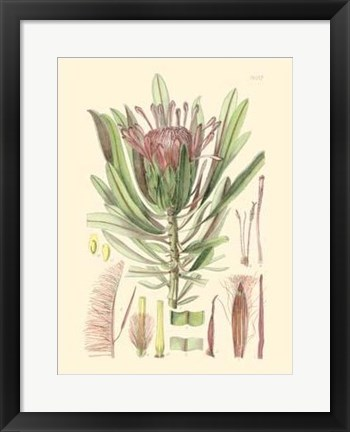 Framed Floral Passion IV Print
