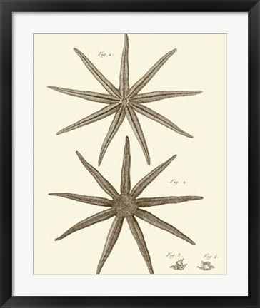 Framed Striking Starfish III Print