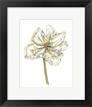 Framed Tulip Beauty II Print