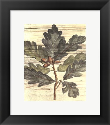 Framed Small Weathered Oak Leaves I Print