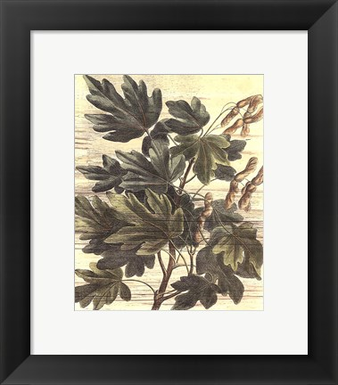 Framed Small Weathered Maple Leaves I Print