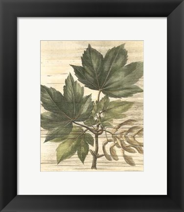 Framed Small Weathered Maple Leaves II Print