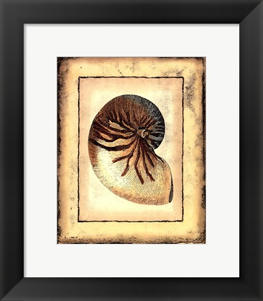 Framed Small Rustic Shell IV Print
