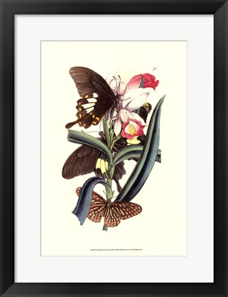 Framed Butterflies and Flora I Print