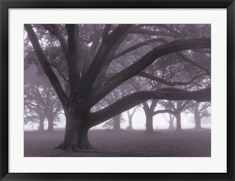 Framed Oak Grove in Fog Print