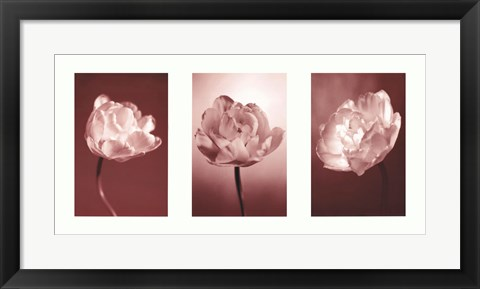 Framed Cherry Blooms Print