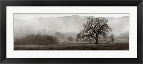 Framed Meadow Oak Tree Print