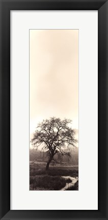 Framed Valley Oak Tree Print