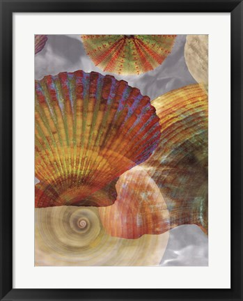 Framed Shell Suite II Print