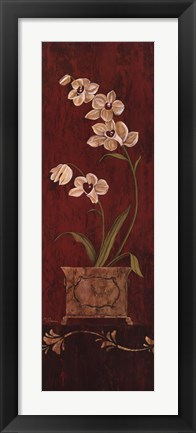 Framed Orchid Allure II Print