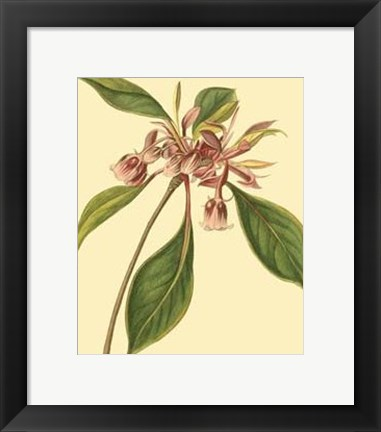 Framed Tropical Ambrosia III Print