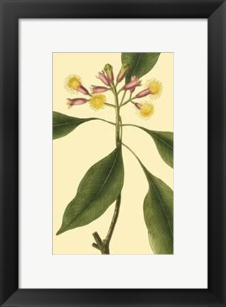 Framed Tropical Ambrosia IV Print