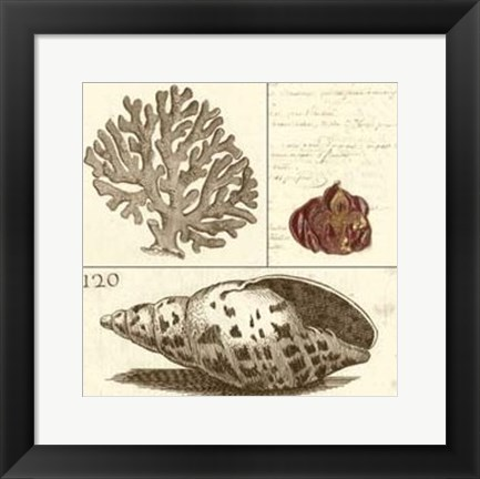 Framed Shell Classification III Print