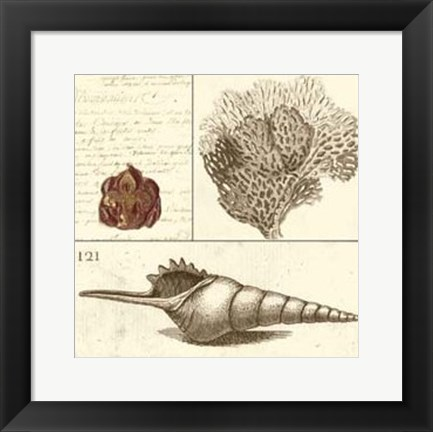 Framed Shell Classification IV Print