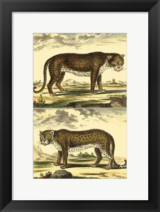 Framed Panther and Leopard Print