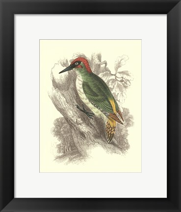 Framed Green Woodpecker Print