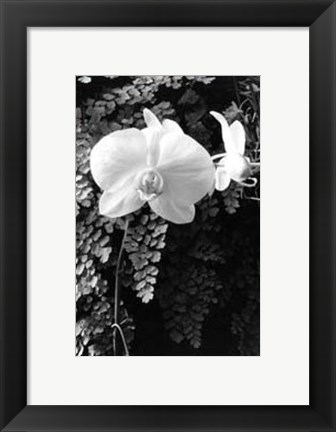 Framed Striking Orchids I Print
