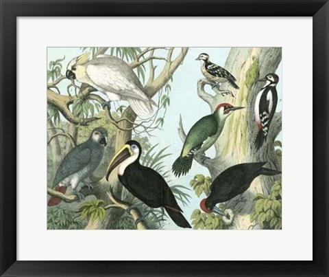 Framed Avian Collection I Print