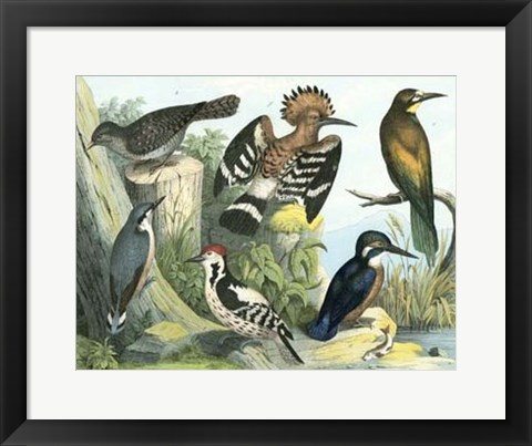 Framed Avian Collection II Print