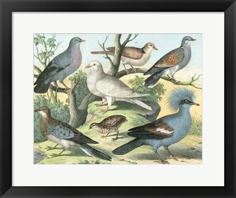 Framed Avian Collection III Print