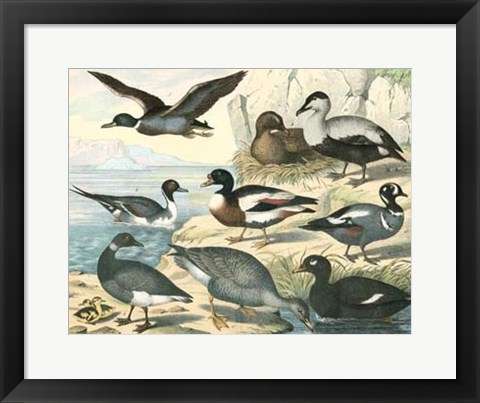 Framed Avian Collection IV Print