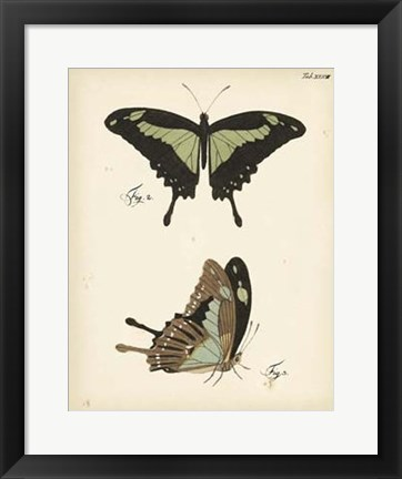Framed Butterfly Profile III Print