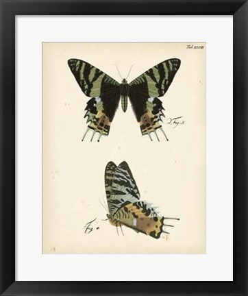 Framed Butterfly Profile IV Print