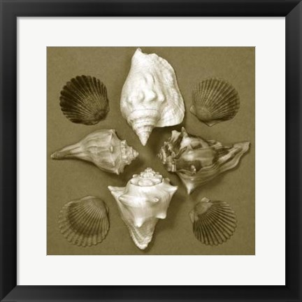 Framed Shell Collector Series III Print