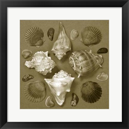 Framed Shell Collector Series IV Print