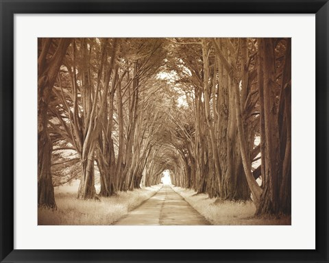 Framed Cypresses Print