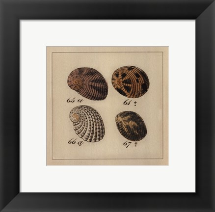 Framed Shells on Rattan I Print
