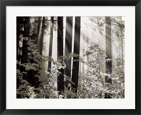Framed Misty Forest Print