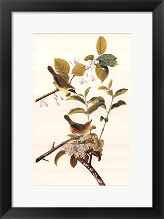 Framed Common Yellow Throat Print