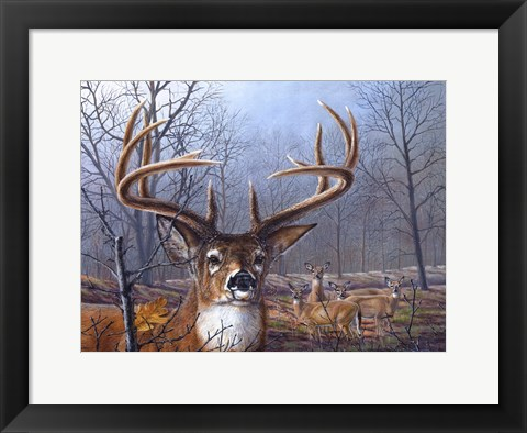 Framed Morning Mist Print