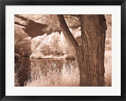 Framed Lakefront View II Print