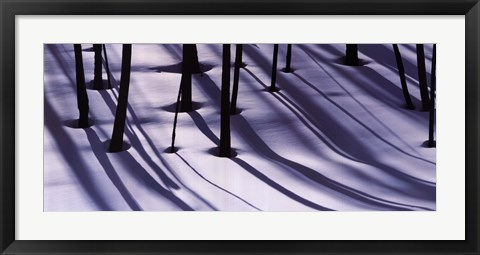 Framed Pine Trees and Morning Shadows Print
