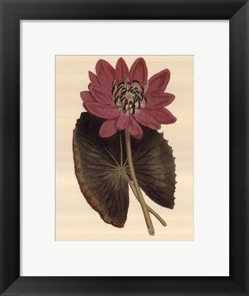 Framed Water Lily Fantasmo Print