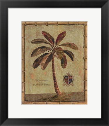 Framed Caribbean Palm IV With Bamboo Border Print