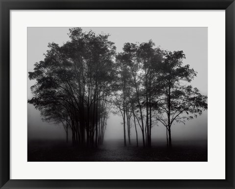 Framed Gathered Trees Print