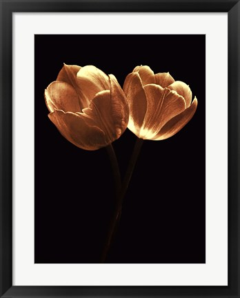 Framed Illuminated Tulips II Print