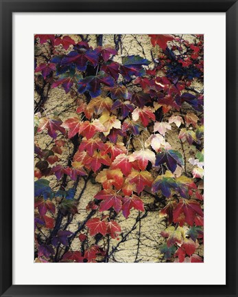 Framed Variegation of the Vines I Print