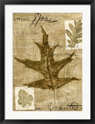 Framed Leaf Collage II Print