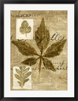 Framed Leaf Collage III Print