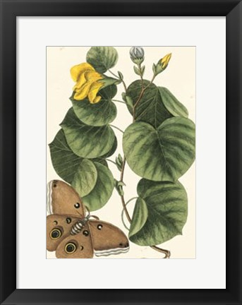 Framed Butterfly and Botanical I Print