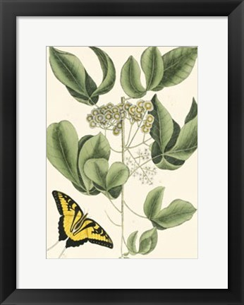 Framed Butterfly and Botanical II Print