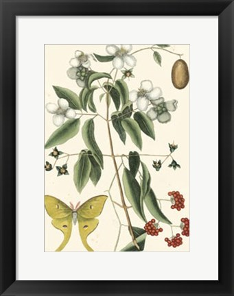 Framed Butterfly and Botanical III Print