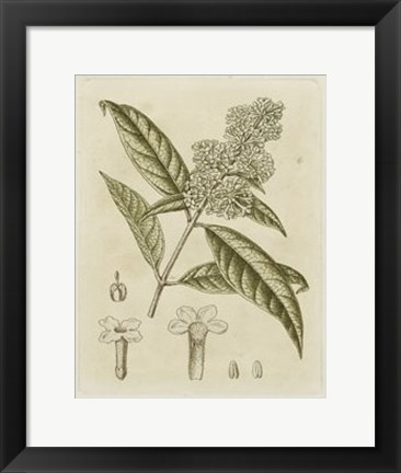 Framed Tinted Botanical II Print